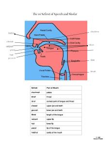 shofar-the-10-sefirot-of-speech-diagram-_2_